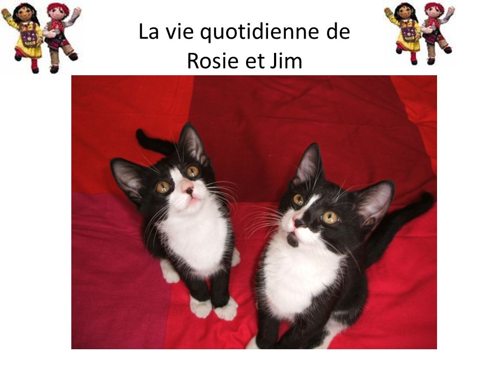 La vie quotidienne de Rosie et Jim