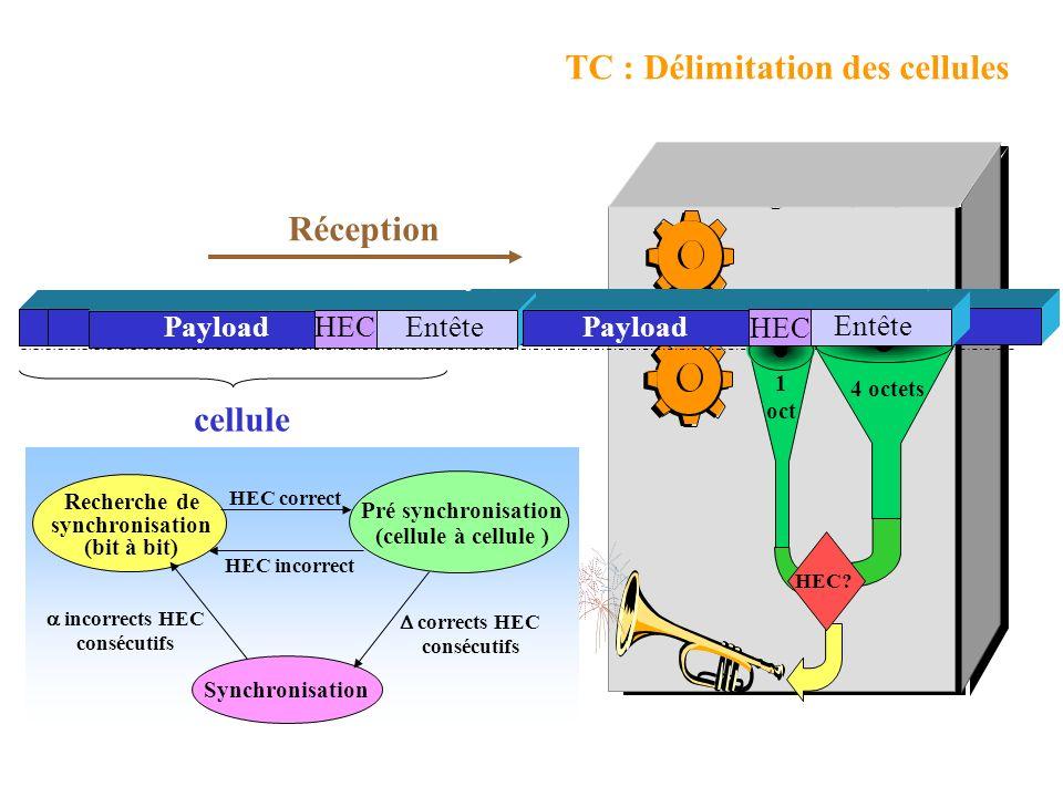 TC : Délimitation des cellules