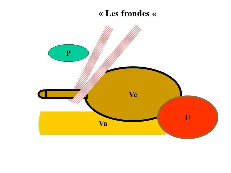 « Les frondes « P Ve U Va
