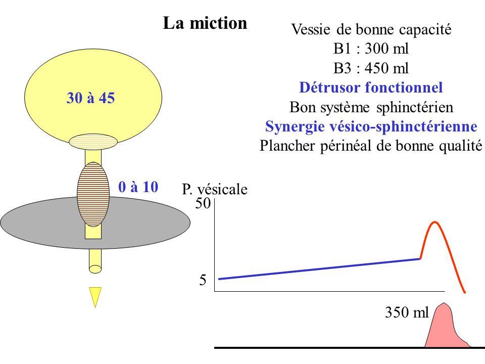 La miction Vessie de bonne capacité B1 : 300 ml B3 : 450 ml