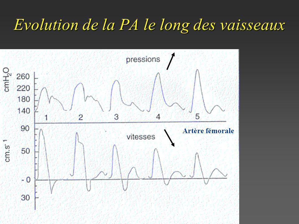 Evolution de la PA le long des vaisseaux