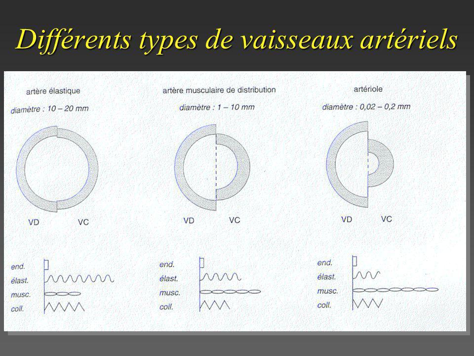 Différents types de vaisseaux artériels