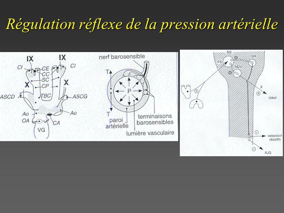 Régulation réflexe de la pression artérielle