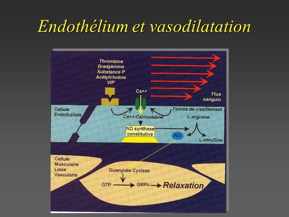 Endothélium et vasodilatation