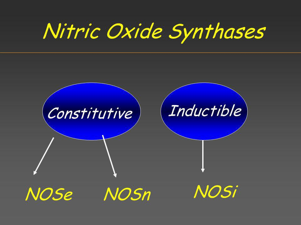 Nitric Oxide Synthases