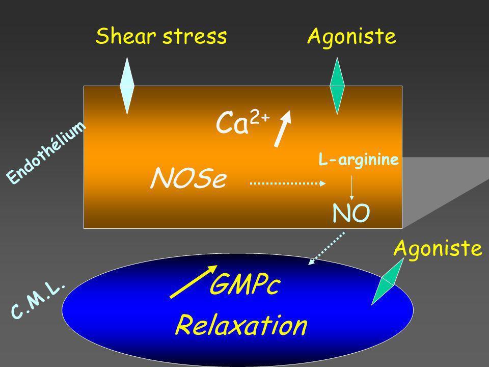 Ca2+ NOSe GMPc Relaxation NO Shear stress Agoniste Agoniste C.M.L.