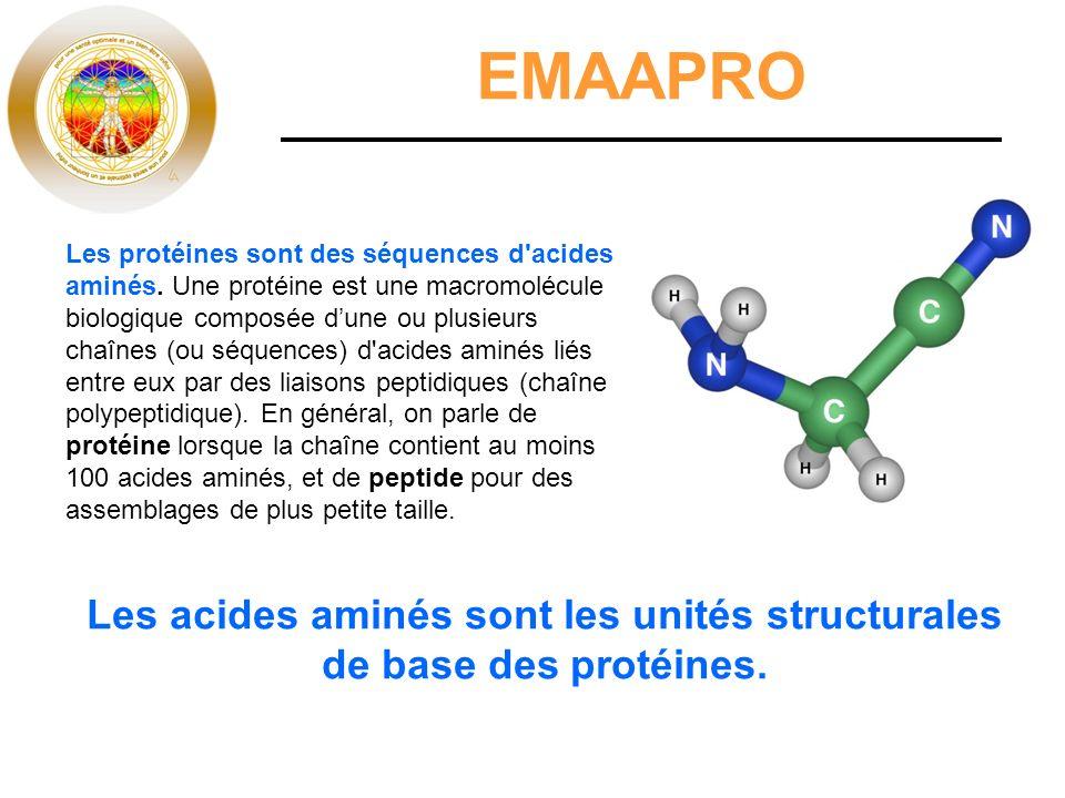 Les acides aminés sont les unités structurales de base des protéines.