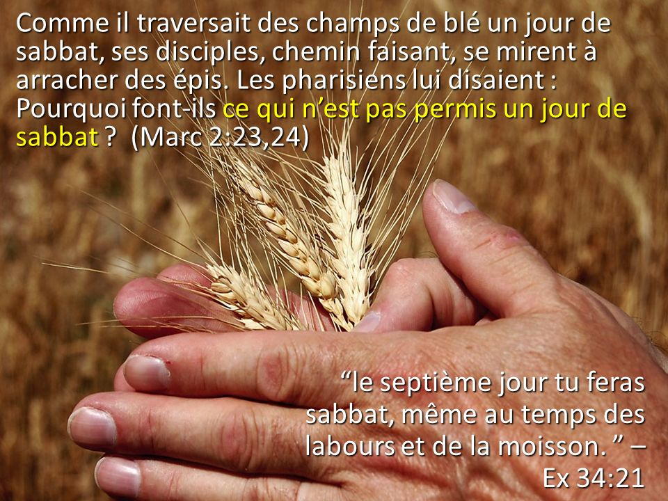 Comme il traversait des champs de blé un jour de sabbat, ses disciples, chemin faisant, se mirent à arracher des épis. Les pharisiens lui disaient : Pourquoi font-ils ce qui n'est pas permis un jour de sabbat (Marc 2:23,24)