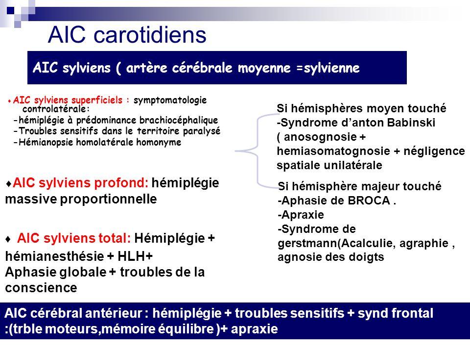 AIC sylviens ( artère cérébrale moyenne =sylvienne