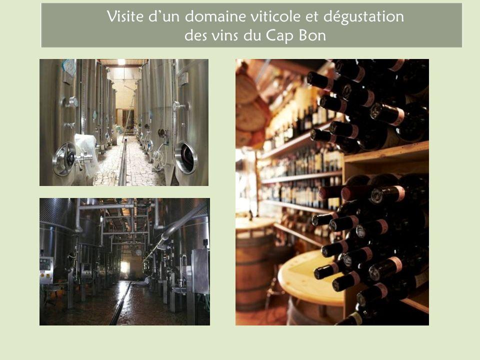 Visite d'un domaine viticole et dégustation des vins du Cap Bon