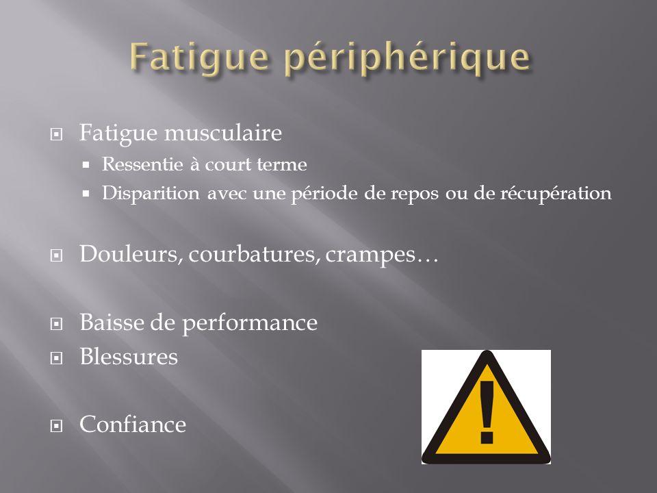 Fatigue périphérique Fatigue musculaire