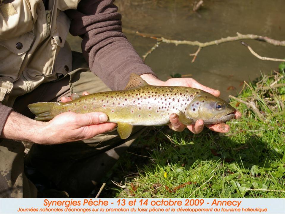 III. Les produits « poissons (attractifs) »