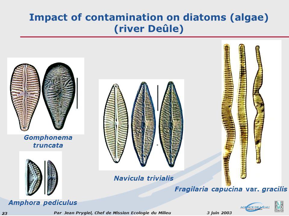 Impact of contamination on diatoms (algae) (river Deûle)