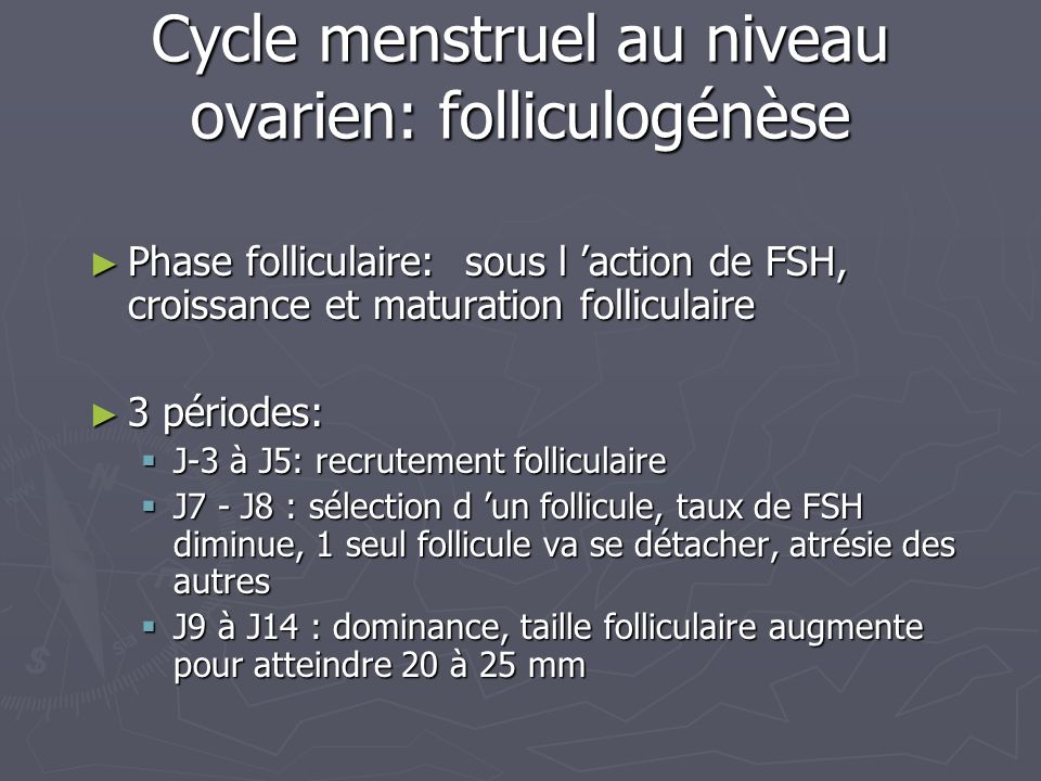 Cycle menstruel au niveau ovarien: folliculogénèse
