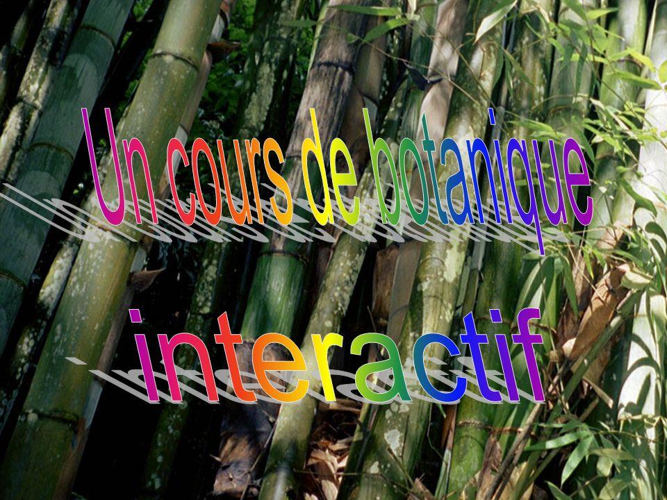 Titre Un cours de botanique interactif