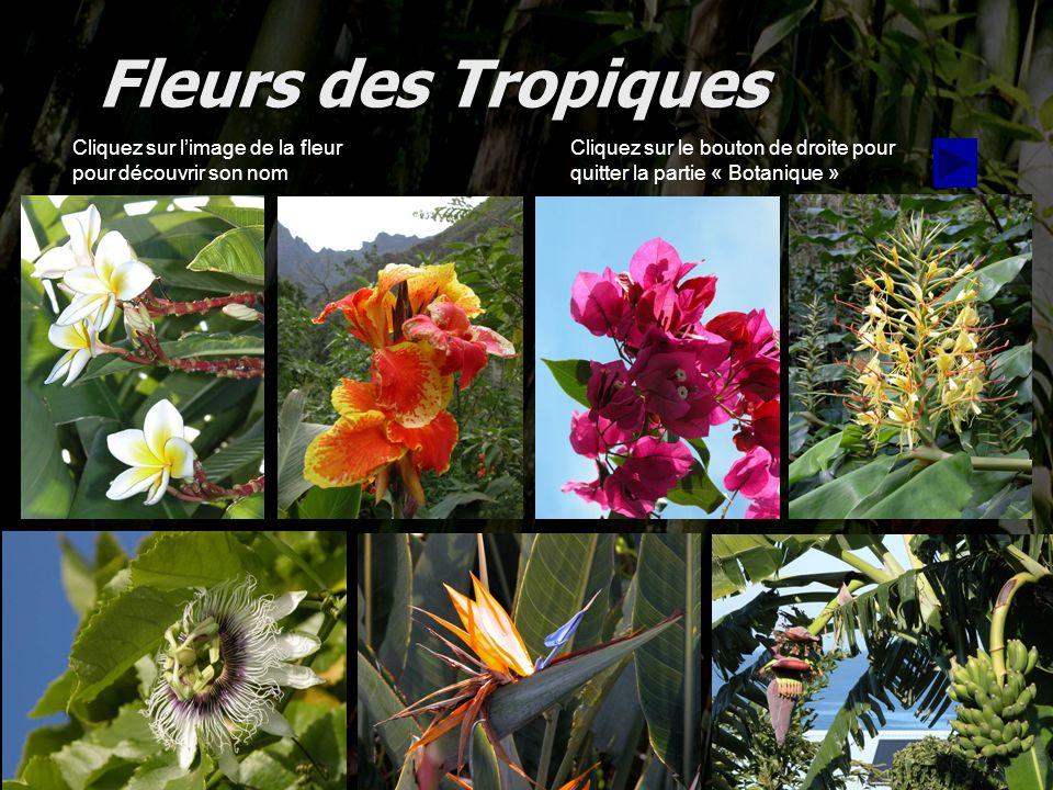 Fleurs des Tropiques Cliquez sur l'image de la fleur pour découvrir son nom.