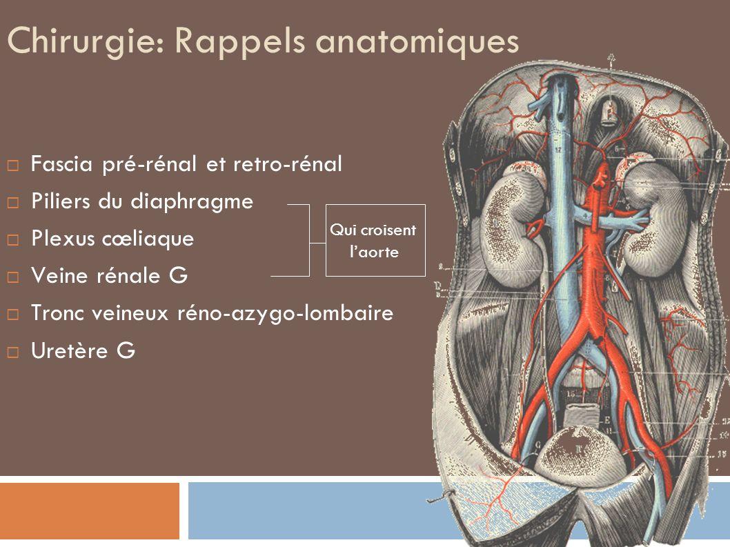Chirurgie: Rappels anatomiques
