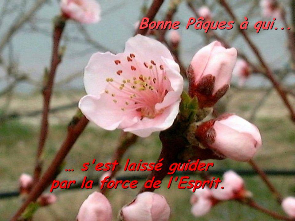 Bonne Pâques à qui... … s est laissé guider par la force de l Esprit.
