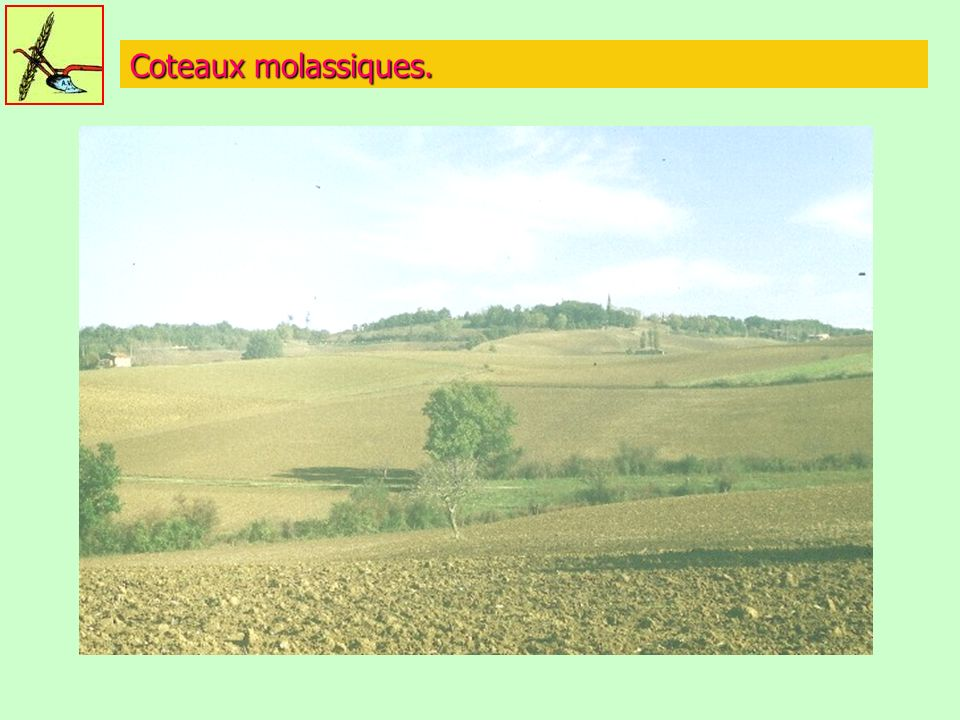 Coteaux molassiques.