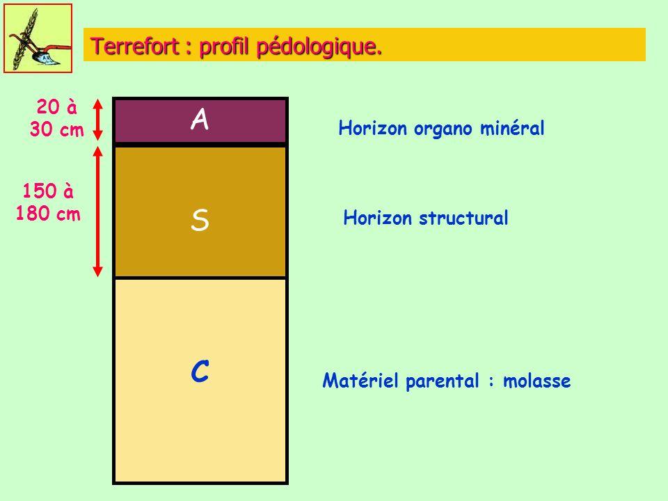 Terrefort : profil pédologique.