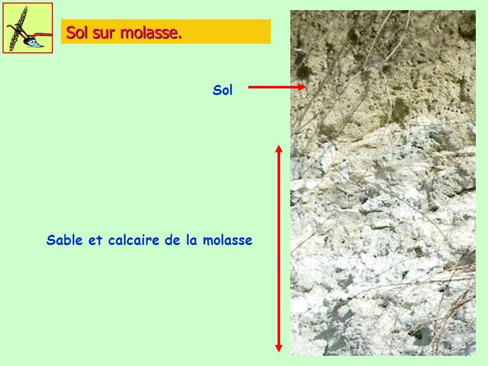Sable et calcaire de la molasse