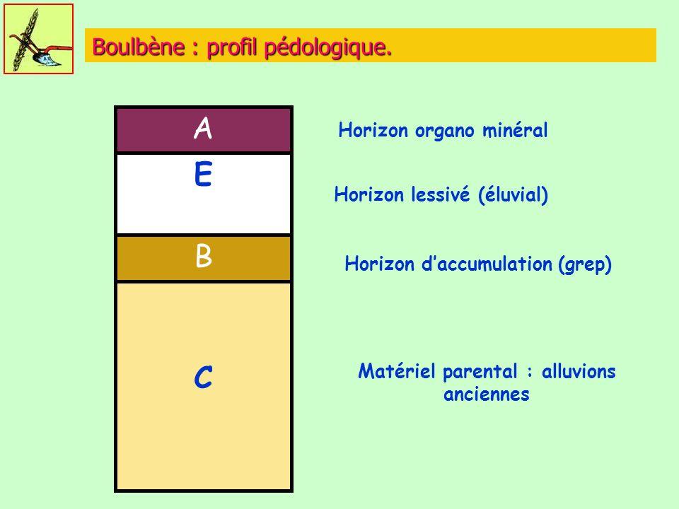Boulbène : profil pédologique.
