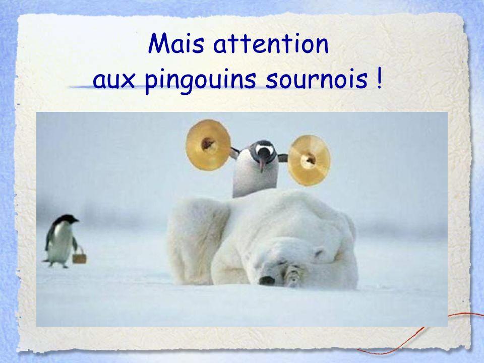 aux pingouins sournois !