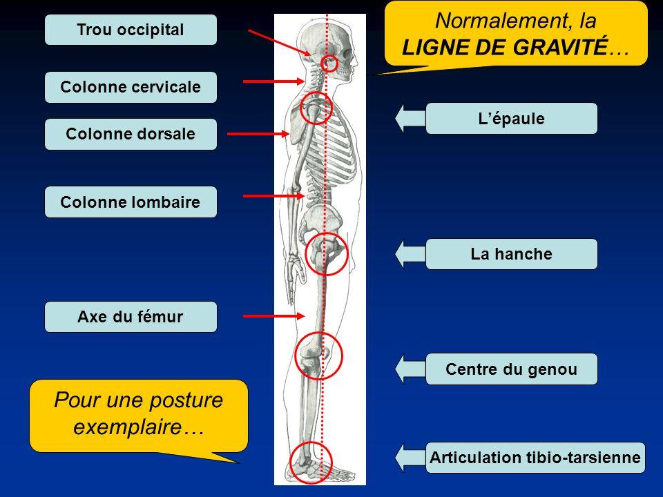 Articulation tibio-tarsienne