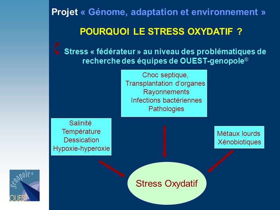 POURQUOI LE STRESS OXYDATIF