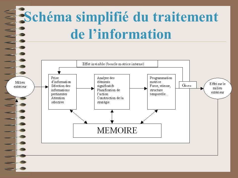 Schéma simplifié du traitement de l'information