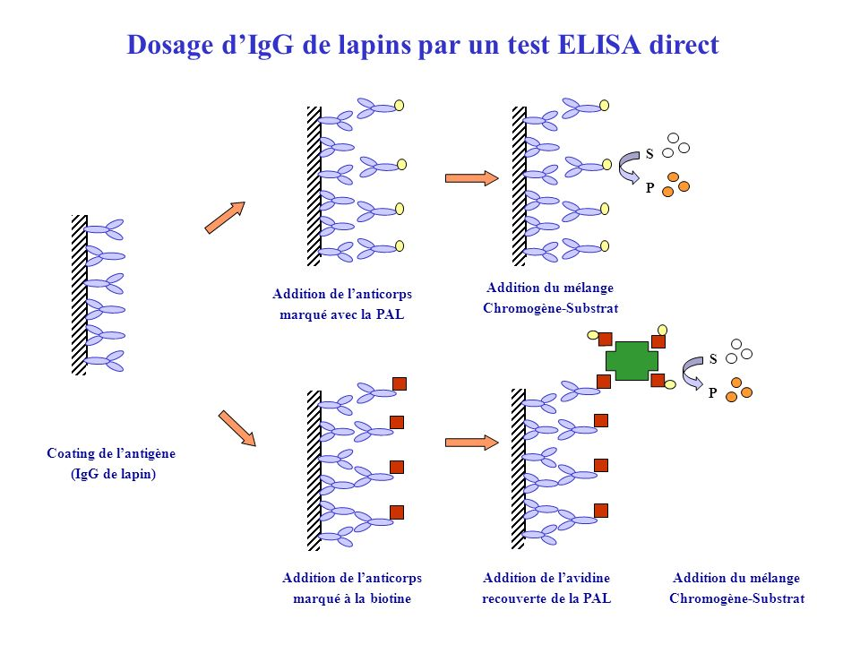 Dosage d'IgG de lapins par un test ELISA direct