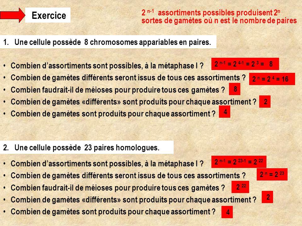 Exercice 2 n-1 assortiments possibles produisent 2n sortes de gamètes où n est le nombre de paires.