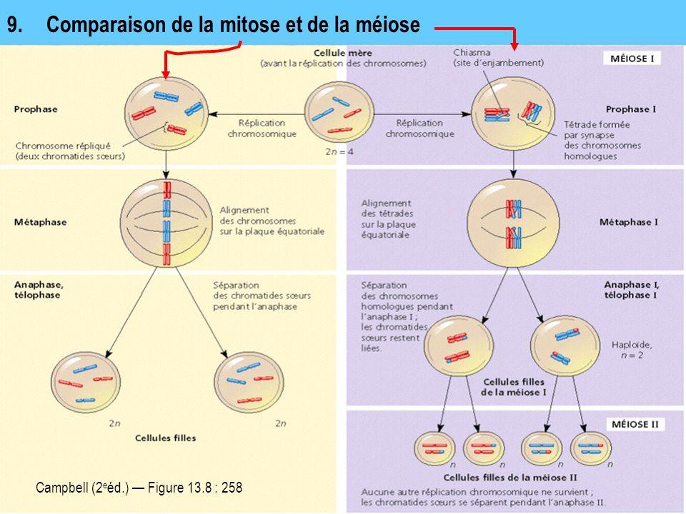 9. Comparaison de la mitose et de la méiose