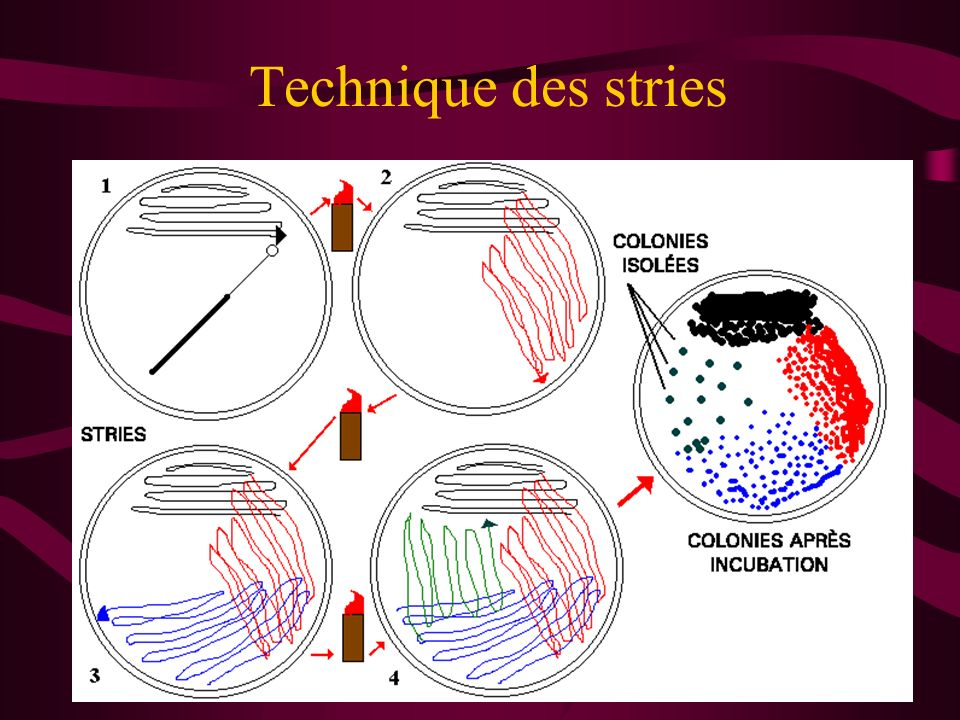Technique des stries