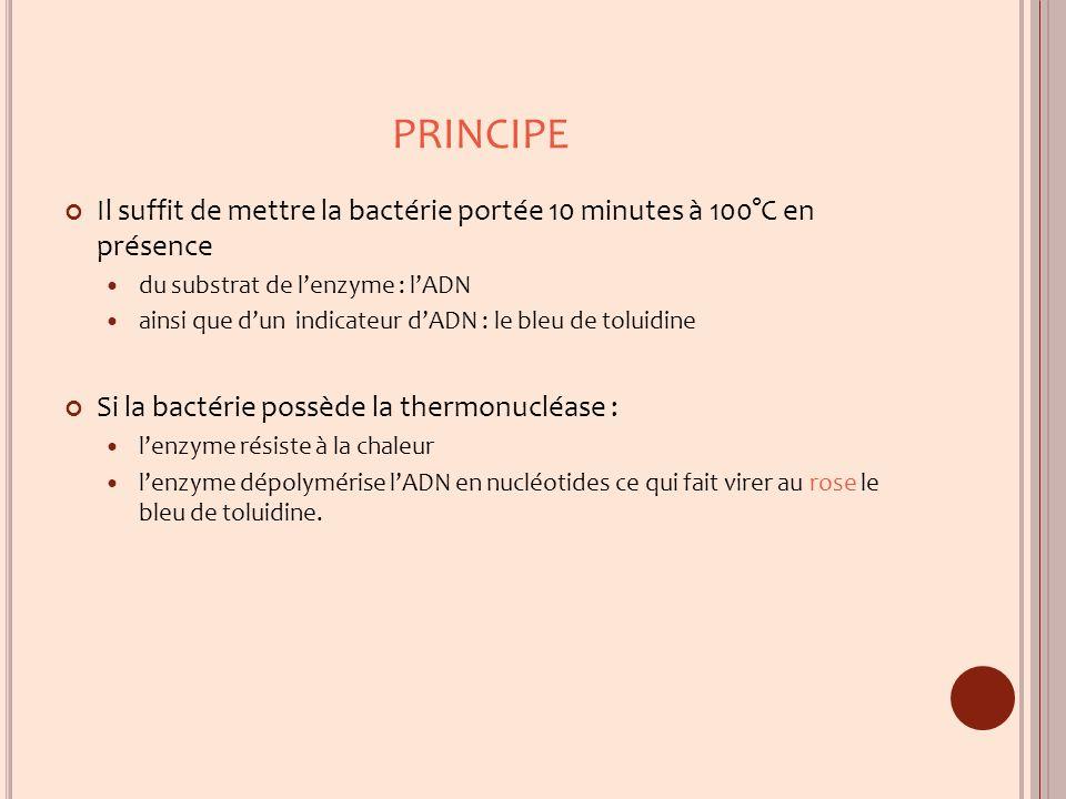 PRINCIPE Il suffit de mettre la bactérie portée 10 minutes à 100°C en présence. du substrat de l'enzyme : l'ADN.