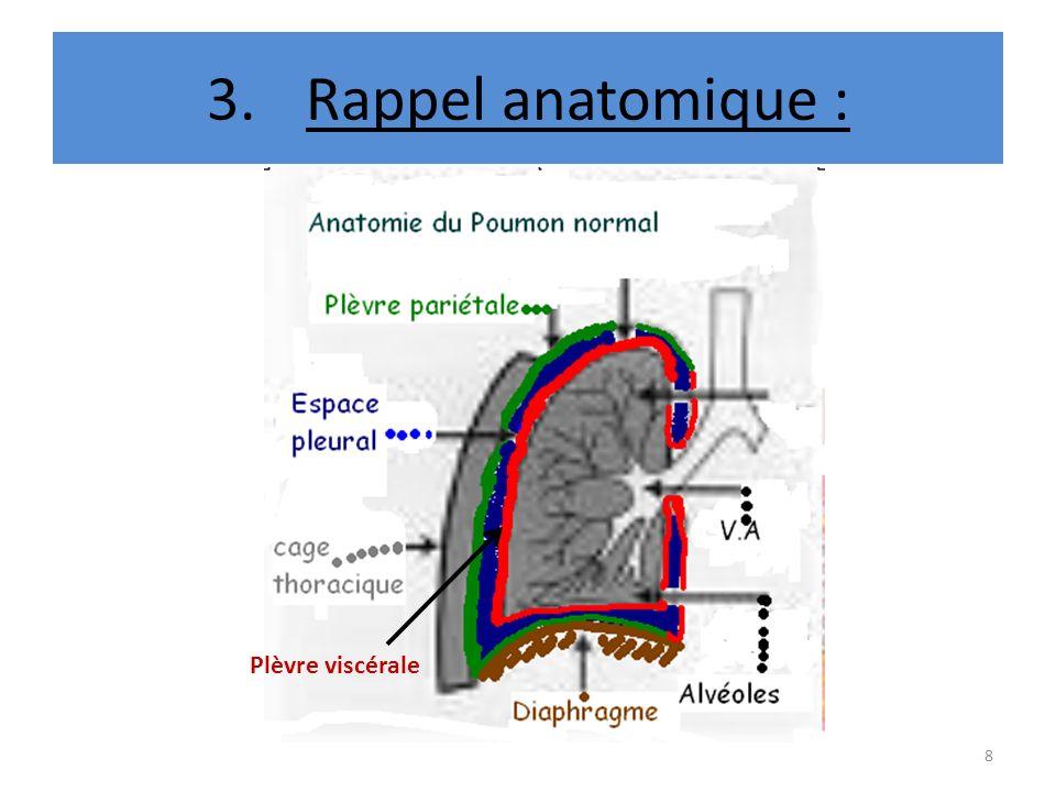Rappel anatomique : Plèvre viscérale