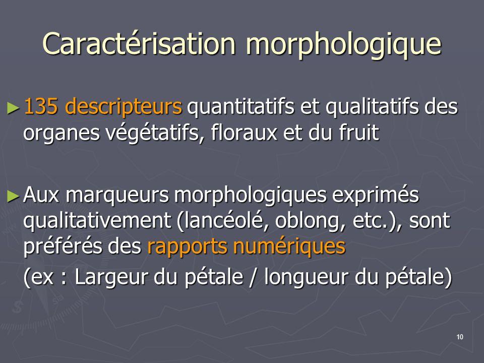 Caractérisation morphologique