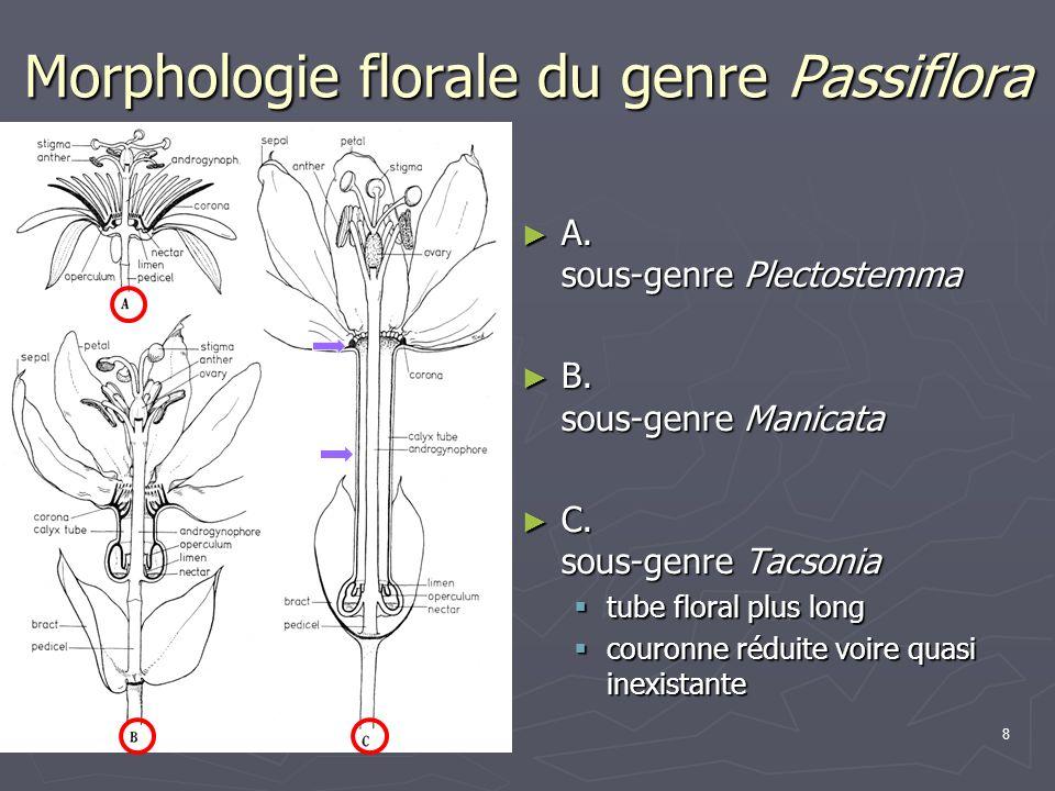 Morphologie florale du genre Passiflora
