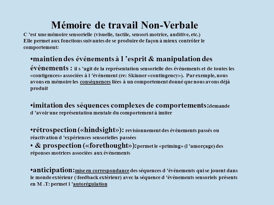 Mémoire de travail Non-Verbale