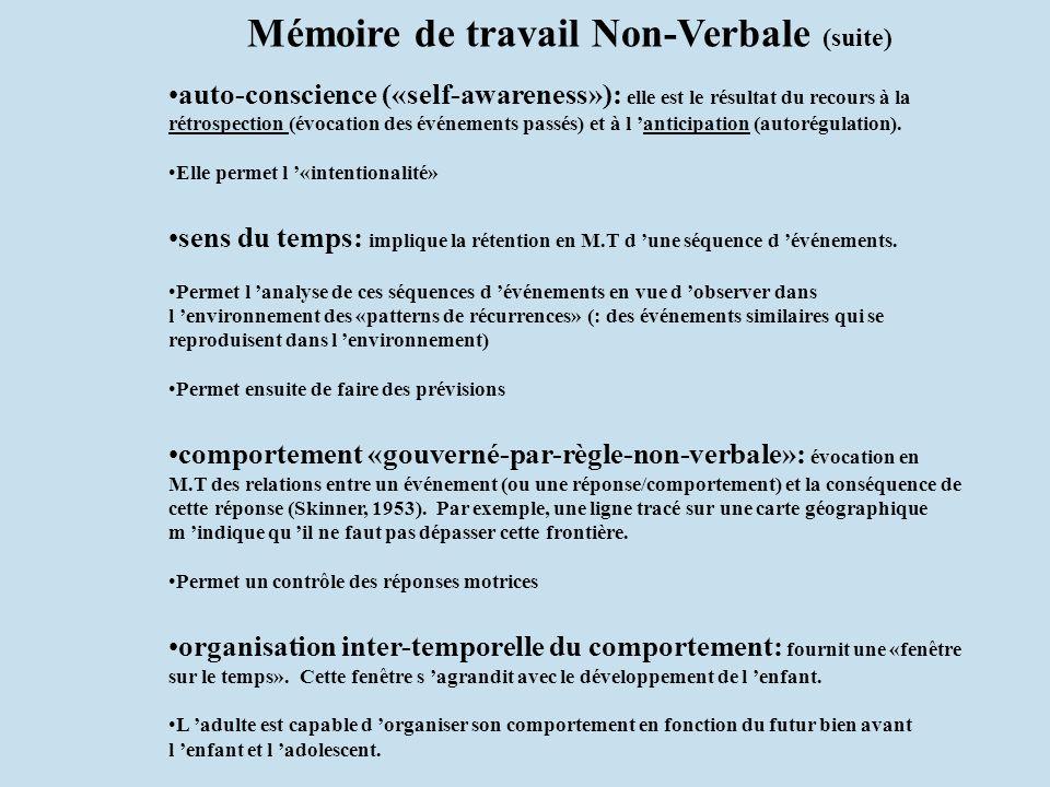 Mémoire de travail Non-Verbale (suite)