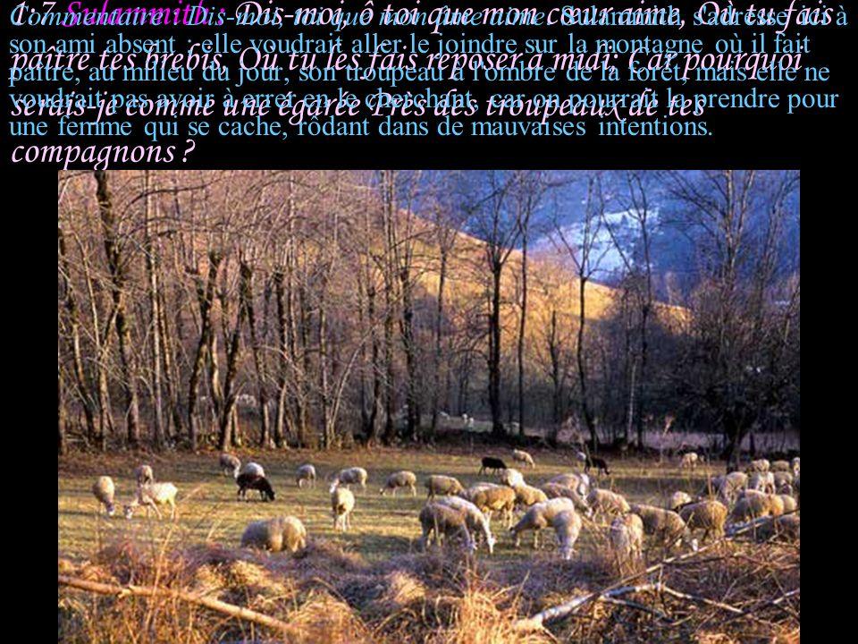 1:7 Sulammith : Dis-moi, ô toi que mon cœur aime, Où tu fais paître tes brebis, Où tu les fais reposer à midi; Car pourquoi serais-je comme une égarée Près des troupeaux de tes compagnons