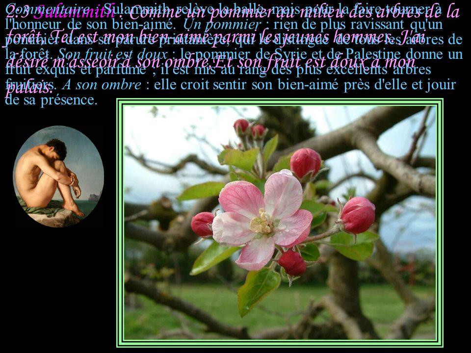 2:3 Sulammith : Comme un pommier au milieu des arbres de la forêt, Tel est mon bien-aimé parmi les jeunes hommes. J ai désiré m asseoir à son ombre,Et son fruit est doux à mon palais.