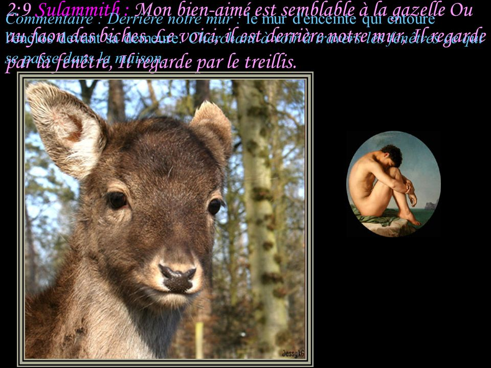 2:9 Sulammith : Mon bien-aimé est semblable à la gazelle Ou au faon des biches. Le voici, il est derrière notre mur, Il regarde par la fenêtre, Il regarde par le treillis.