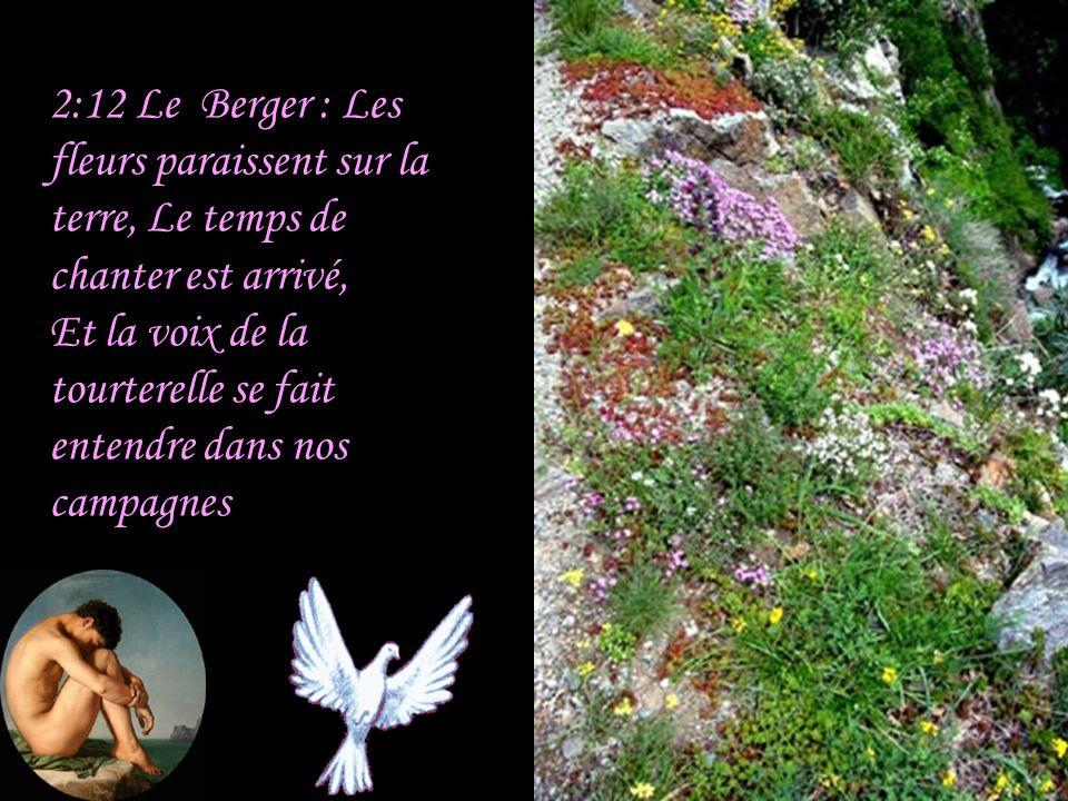 2:12 Le Berger : Les fleurs paraissent sur la terre, Le temps de chanter est arrivé, Et la voix de la tourterelle se fait entendre dans nos campagnes