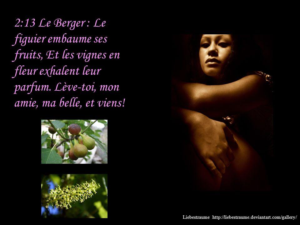 2:13 Le Berger : Le figuier embaume ses fruits, Et les vignes en fleur exhalent leur parfum. Lève-toi, mon amie, ma belle, et viens!