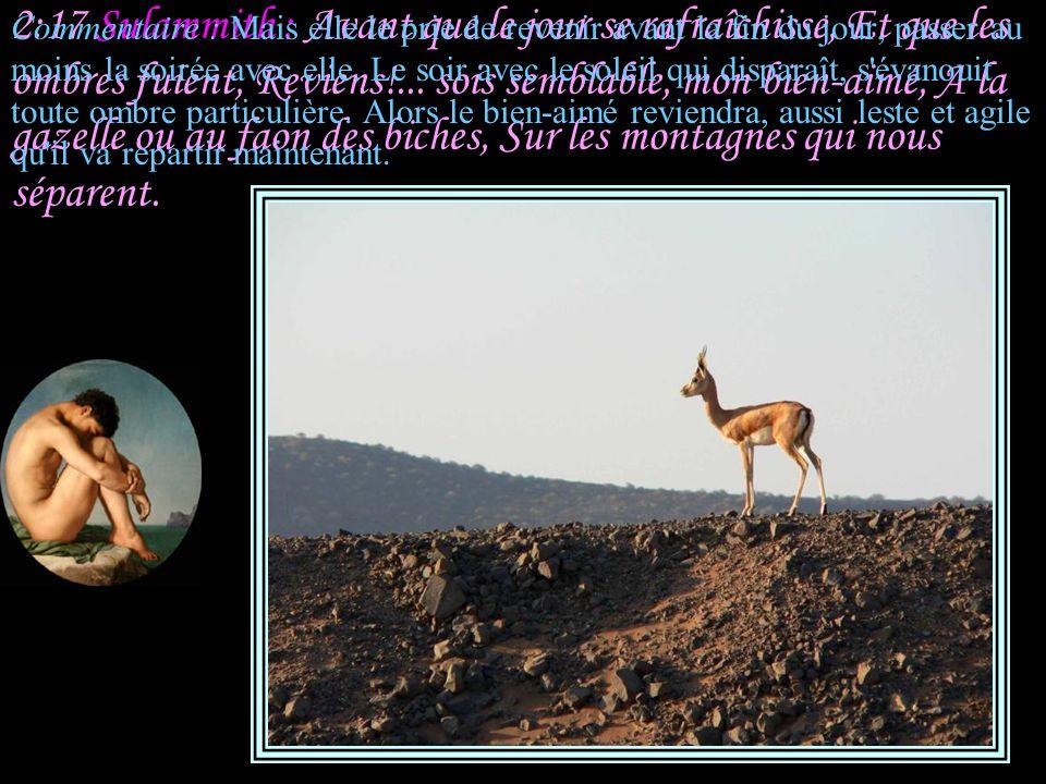 2:17 Sulammith : Avant que le jour se rafraîchisse, Et que les ombres fuient, Reviens!... sois semblable, mon bien-aimé, A la gazelle ou au faon des biches, Sur les montagnes qui nous séparent.