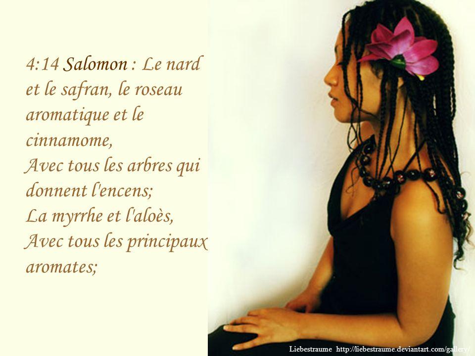 4:14 Salomon : Le nard et le safran, le roseau aromatique et le cinnamome, Avec tous les arbres qui donnent l encens; La myrrhe et l aloès, Avec tous les principaux aromates;