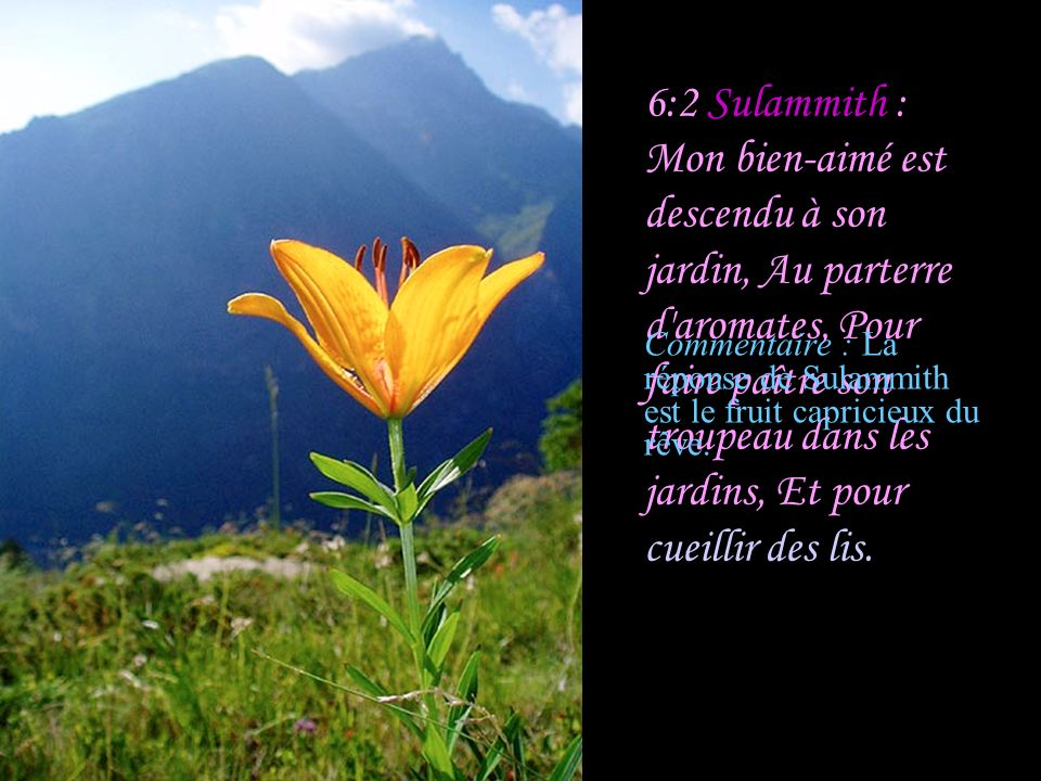 Commentaire : La réponse de Sulammith est le fruit capricieux du rêve.