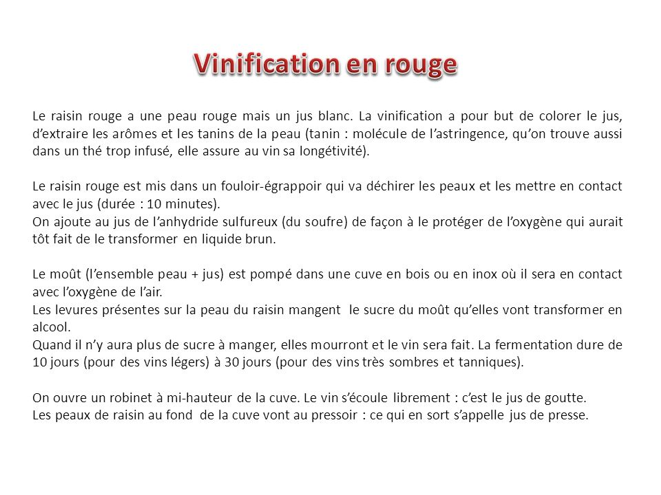 Vinification en rouge