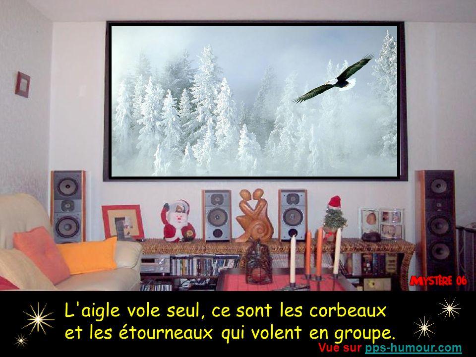 L aigle vole seul, ce sont les corbeaux et les étourneaux qui volent en groupe.